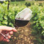 De heerlijke wijnen van Fabio Cordella x Wesley Sneijder
